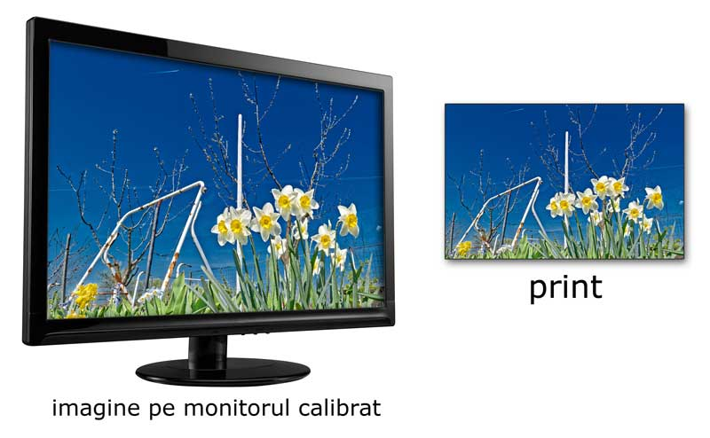 vizualizare imagine pe monitor calibrat